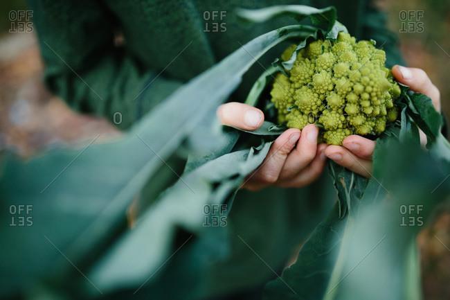Boy holding romanesco broccoli