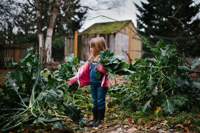Little girl pulling leaves from plants in a garden