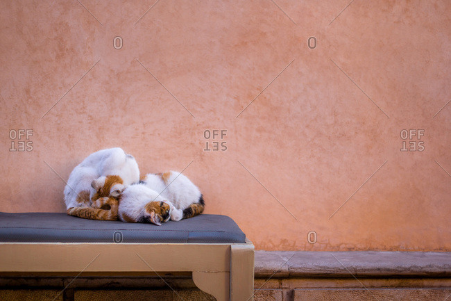 Cats curled up together in Marrakech, Morocco
