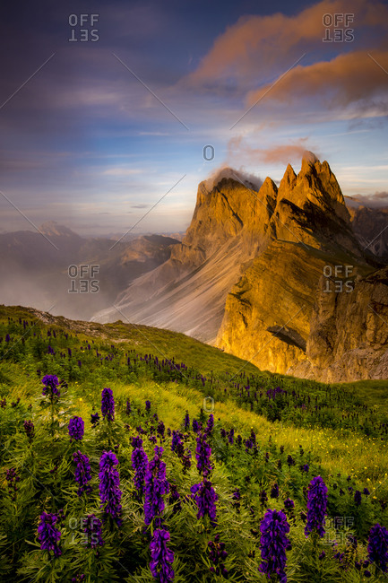 Jagged mountains with purple wildflowers and green grass under a pink and blue sky