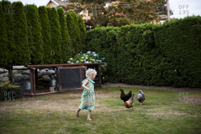 A young girl runs around with her backyard chickens near her family coop in Seattle, WA