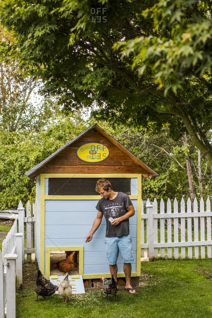 Man feeding chicken in front of his backyard chicken coop