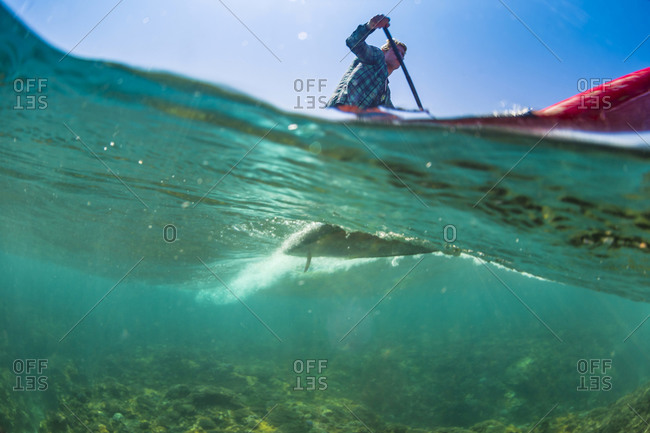 Low angle view of Sup surfing in tropical water