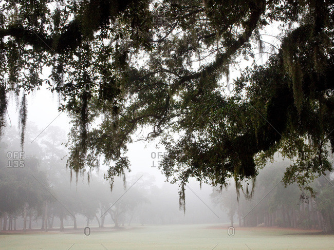Foggy morning in Lowcountry, South Carolina
