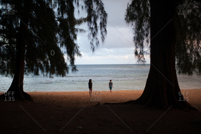 Boy and girl walking between tall trees on a beach