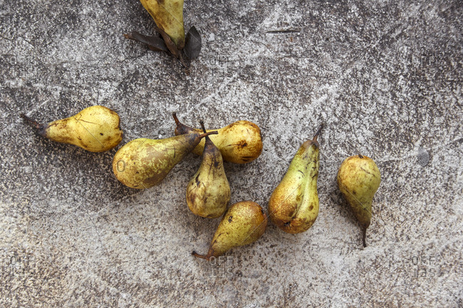 Ripe Bartlett pears on concrete background