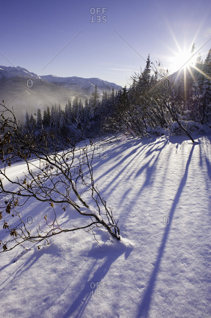Trees on a snowy mountain slope