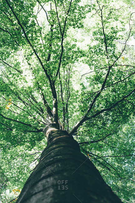 Looking up at a tree in a forest