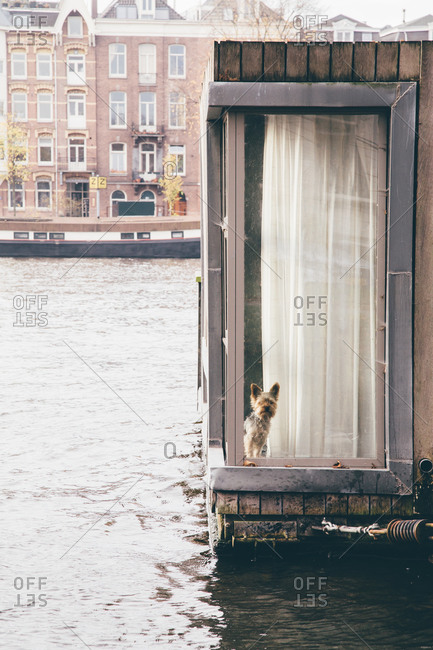 Dog looking out of a window on a canal in Amsterdam, Netherlands