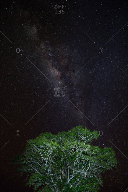 Galaxy in a night sky over treetops
