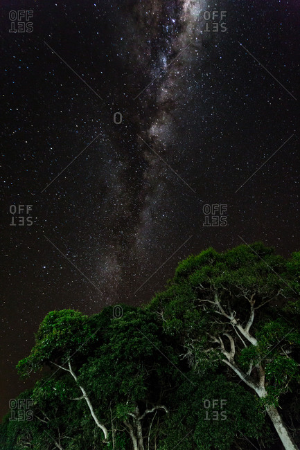Bright constellations over treetops at night