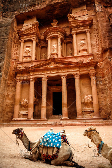 Camels in front of the Treasury (El Khazneh) in Petra, Jordan