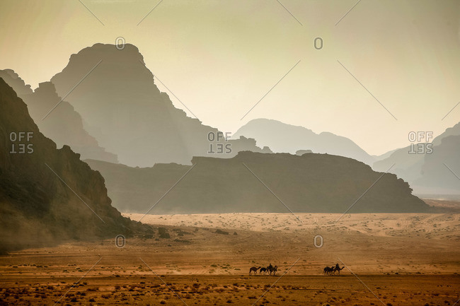Camels riding in the desert in Wadi Rum, Jordan