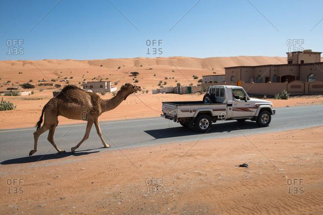 Wahiba Sands desert, Oman - February 3, 2015: Camel and truck in desert town, Oman