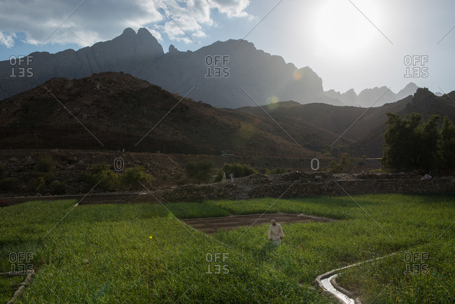 Agriculture field in the Hajar Mountains, Oman