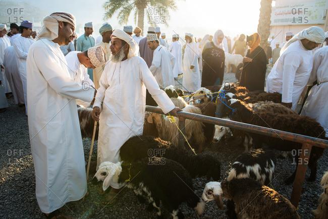 Nizwa, Oman - February 6, 2015: Livestock for sale during the Friday market