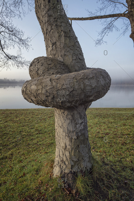 Tree trunk with knot on lake in Ibm, Austria