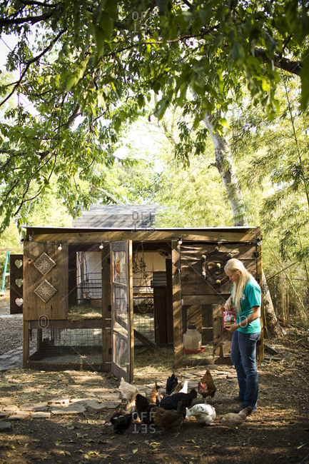 Woman feeding the chickens in backyard chicken coop