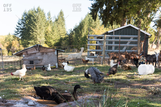 Animals on a farm