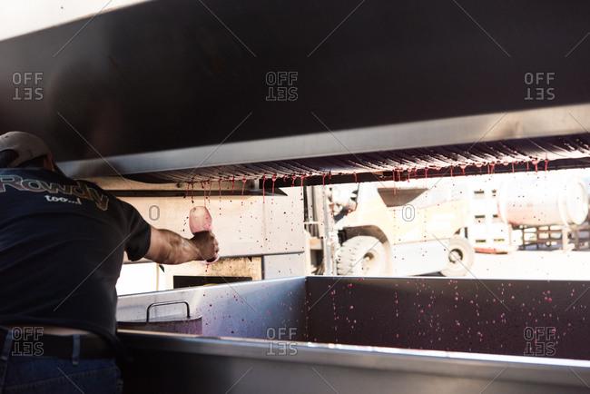 Man catching wine from a grape crushing machine