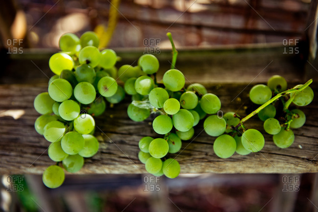Grape bunches on wood surface