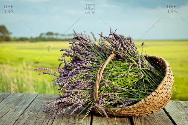 Lavender in a hand basket