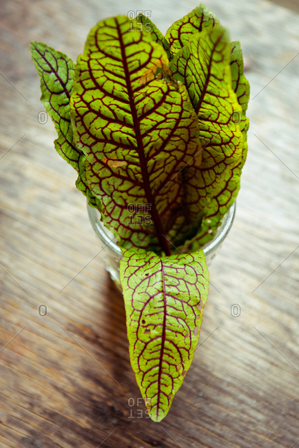Chard leaves in a glass