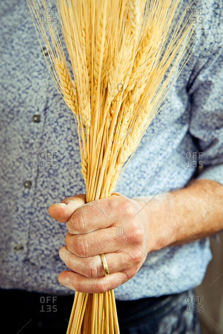 Man holding stalks of grain