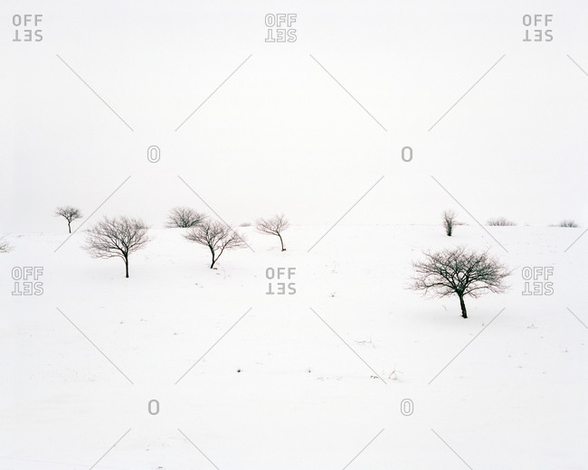 Bare trees with snow outside of Janesville, Wisconsin