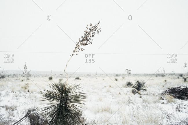 Desert landscape in Texas during the winter