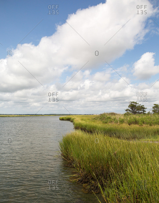 Grassy wetlands on a clear day