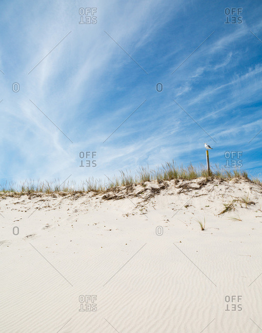 Bird perched on post above sand dune