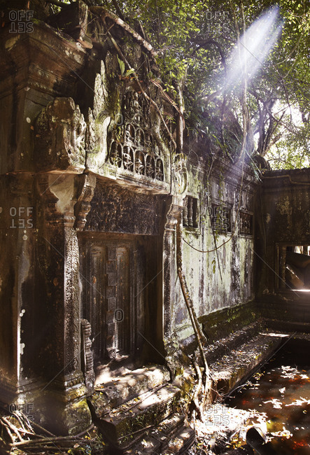 Sunlight streaming through jungle at temple in Cambodia