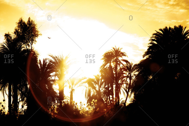 Palm trees silhouetted against sunset in sky in Egypt