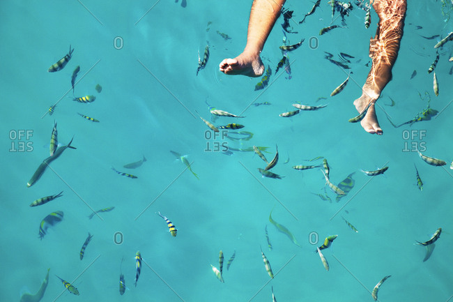 Man's feet floating among yellow, black and white tropical fish, Thailand