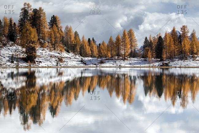 The orange larches are reflected on the Federa lake, Belluno, Italy