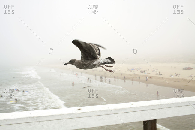 Seagull hovering over a pier