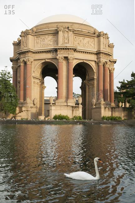 Swan swimming at a pond at the Palace of Fine Arts, San Francisco