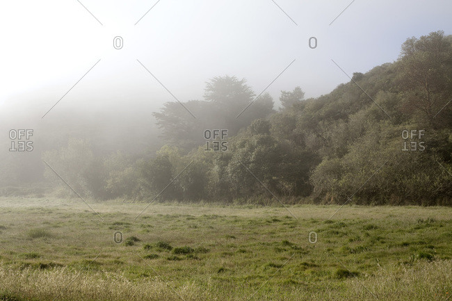 Green field and hills in a mist