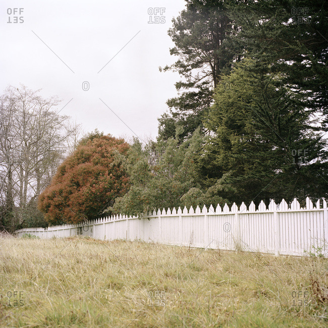 White picket fence against a tree line