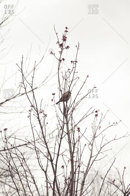 Bird resting in a tree branch