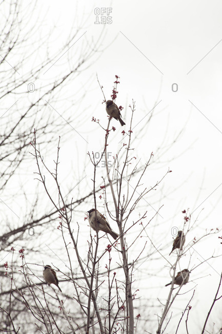 Birds perched in tree branches