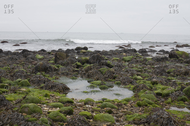 Mossy rocks and a tidal pool at a beach in Montauk
