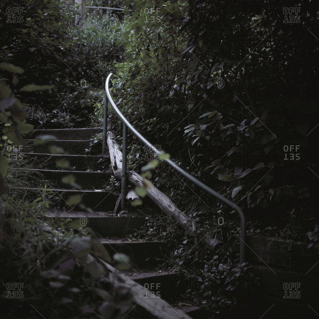 Cement stairs on an overgrown path