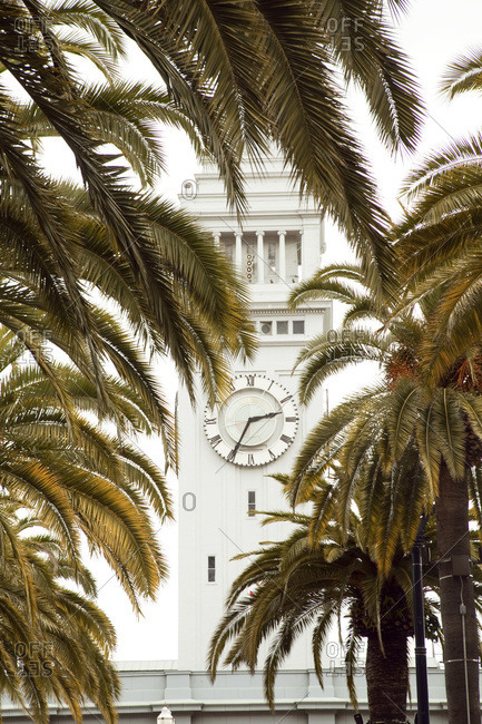 Palm trees in front of a clock tower in San Francisco