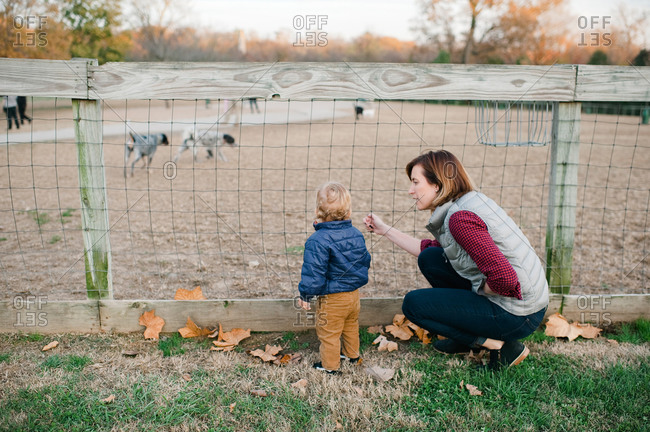 Mother and toddler son looking at dogs at a dog park