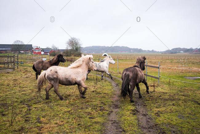 Horses running on a farm