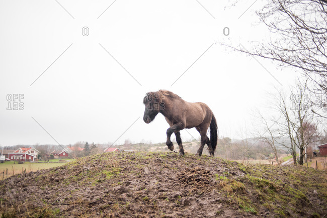 Brown horse on top of a hill