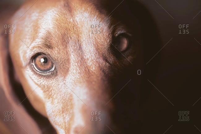 Dog looking towards camera