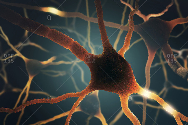 Digital illustration of nerve cells